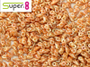 Super8, Chalk Apricot Medium Full, 5 g
